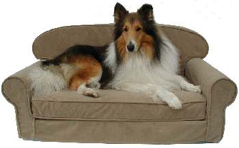 Dilly is posing on a Large Classic Couch in machine-washable soft Camel suede.